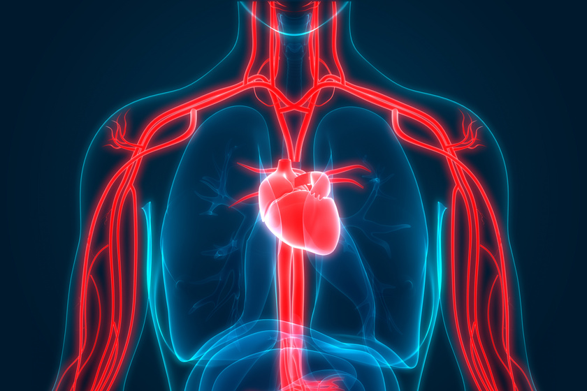 a test helyzete magas vérnyomású álomban