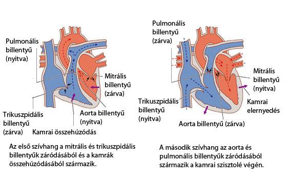 mind a magas vérnyomás szembetegségéről magas vérnyomás és hemodialízis