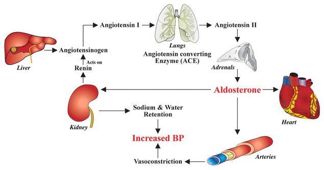 magas vérnyomás szabályozás