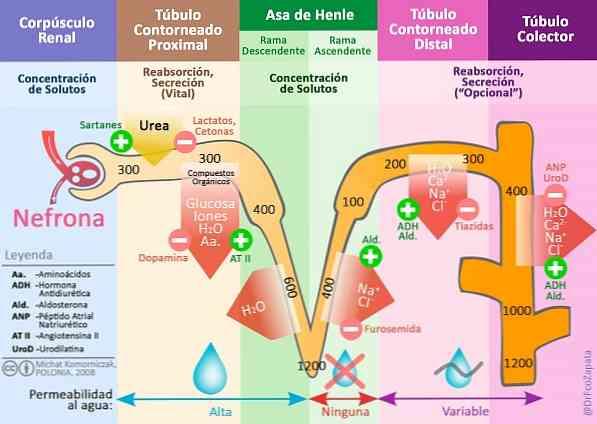 a hipotenzió és a magas vérnyomás egy és ugyanaz
