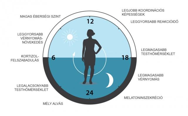 cirkadián ritmusok és magas vérnyomás